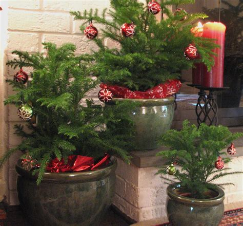 decorate   mini christmas trees  holiday season