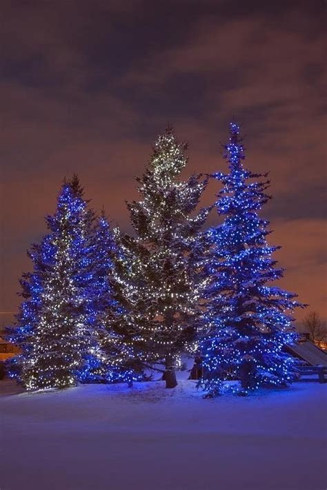 christmas in calgary alberta canada o christmas tree