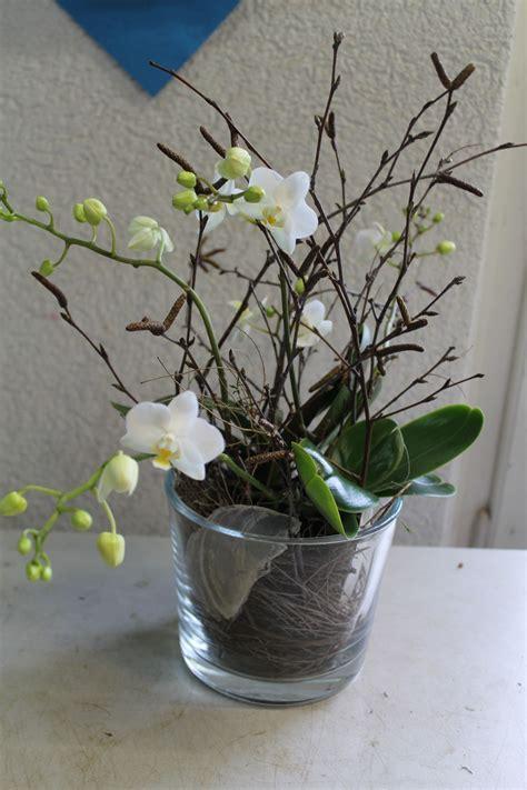 Orchideen Deko Ideen by Diy Weisse Phalaenopsis Orchidee Selber In Glas Eintopfen