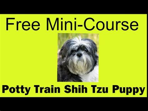 how to potty a shih tzu puppy shih tzu puppy tips breeds picture