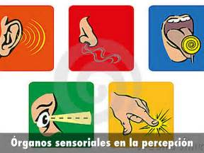 imagenes de umbrales sensoriales percepci 243 n y atenci 243 n by rocioblazquez vaquero