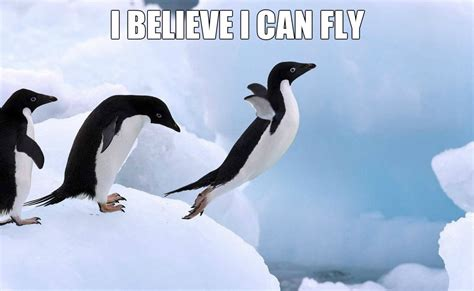 Funny Penguin Memes - funny penguin jokes quotes