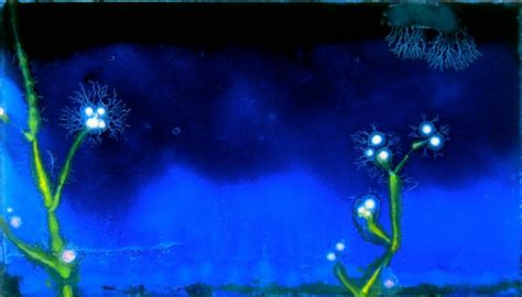 fiori notturni andrea massaioli artist official web site
