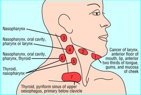 grupos ganglionares de cuello dentistry lectures for mfds mjdf nbde ore differential