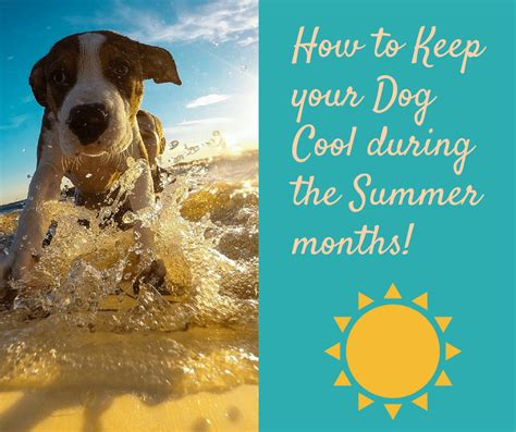 how to keep dogs cool in summer how to keep your cool in the summer keep cool during the summer months