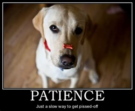 patience puppies sit cavs fans you need to hear this the defend cleveland show
