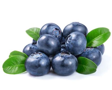 can my eat blueberries blueberries for dogs 101 can dogs eat blueberries and why