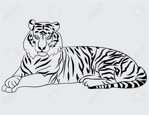 stripeless tiger coloring page tiger outline www imgkid com the image kid has it