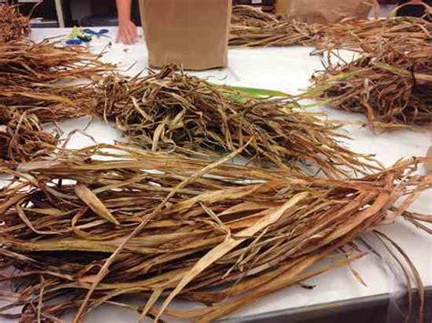 How To Make Paper From Plant Fibers - make paper from plants diy earth news