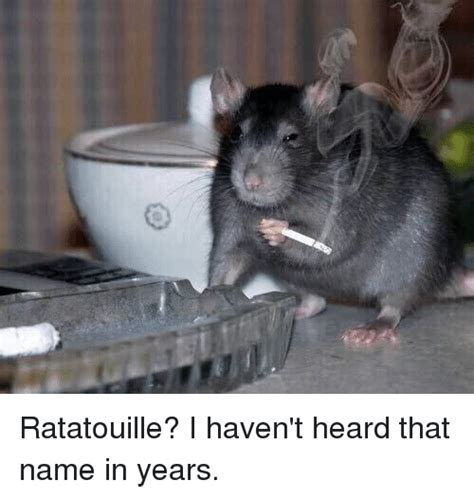 haven t heard ratatouille i haven t heard that name in years funny