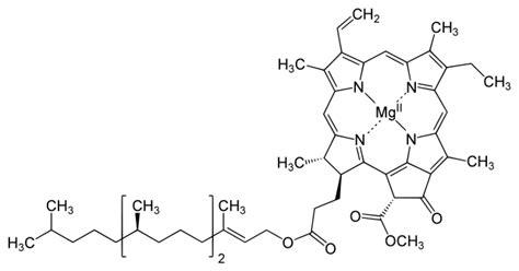 chlorophyll diagram file chlorophyll a structure svg