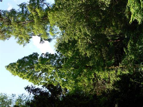 kiel alter botanischer garten alter botanischer garten kiel