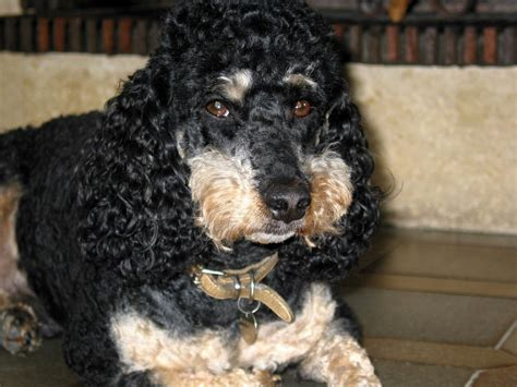 photos of dogs dogs random photo 20510805 fanpop