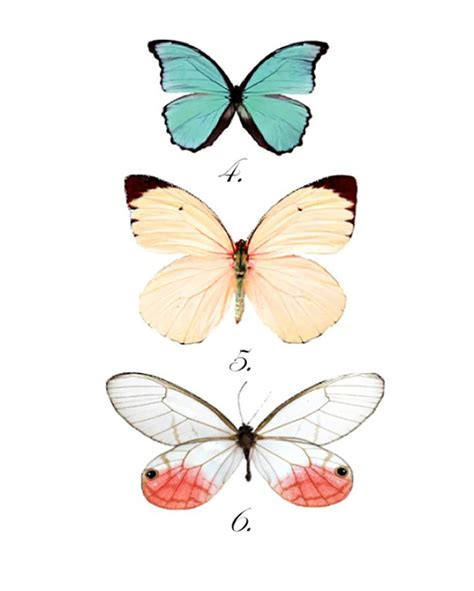 free printable butterfly wall art best 25 butterfly print ideas on pinterest