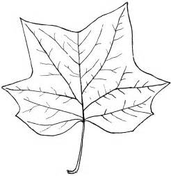 Tree Outline With Leaves genus liriodendron l tulip tree clipart etc