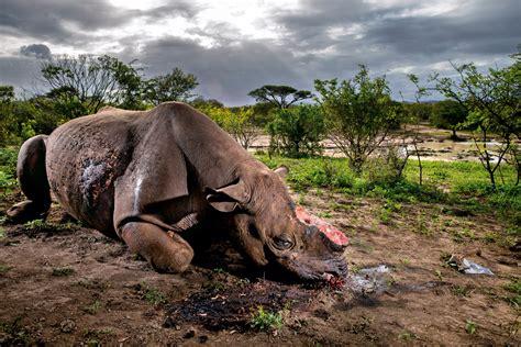 imagenes de animales naturaleza naturaleza y animales 98379 mediabin