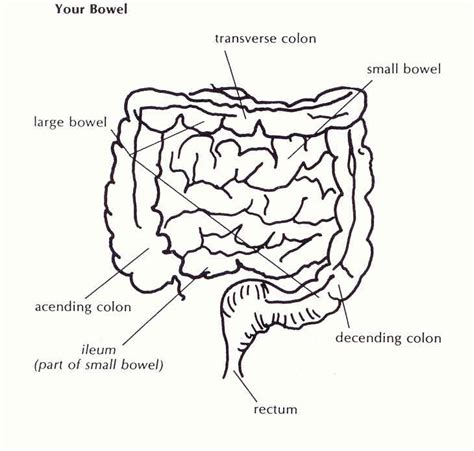 Small Stool Bowel by Bowel Pictures