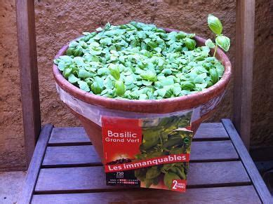 Comment Faire Pousser Du Basilic by Faire Pousser Du Basilic En Pot Basilic Pot Jardinage