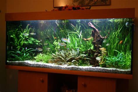 Aquarium Mit Wurzeln Einrichten 6735 by Habt Ihr Ideen Zur Umgestaltung Aquarium Forum