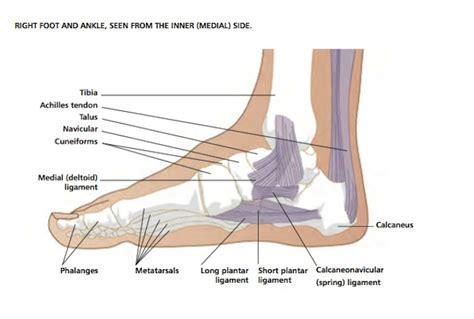foot side of foot diagram foot diagram images