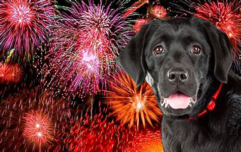 how to comfort dogs during fireworks protecting pets from fireworks the clare chion