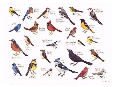 birds in backyards bird finder items similar to eastern north carolina birds field guide