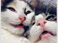 These super close up cat selfies are the positivity we ... Fitness Selfies