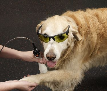 laser therapy for dogs cold laser therapy for dogs dr brian pryor senior bookssenior books