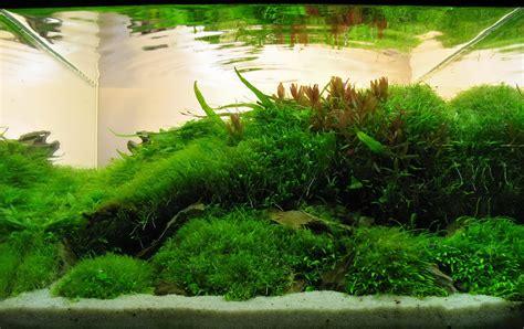 timo wuensche  aquascaping aqua rebell