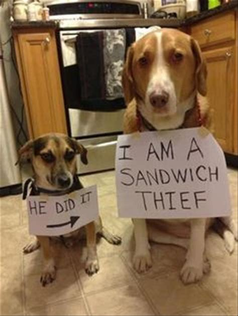 Dog Shaming Meme - funny pictures of the day 112 pics