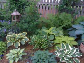 Hosta Garden Layout Hostas June Liberty So Sweet Of The Nile Blue Umbrellas August Moon Patriot And