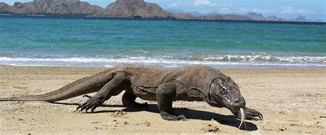 Pulau Komodo, Labuanbajo   Utiket