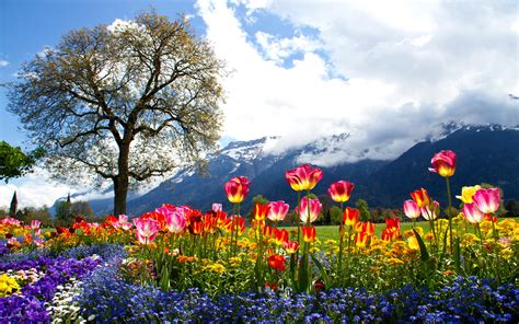 beautiful nature landscape in spring wallpapers and images nature beautiful spring hd wallpapers colored tulip tree