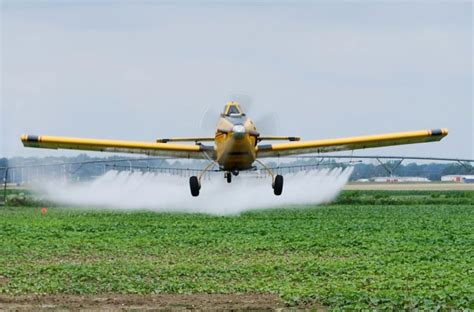 Daster Tatto Jumbo crop dusting images