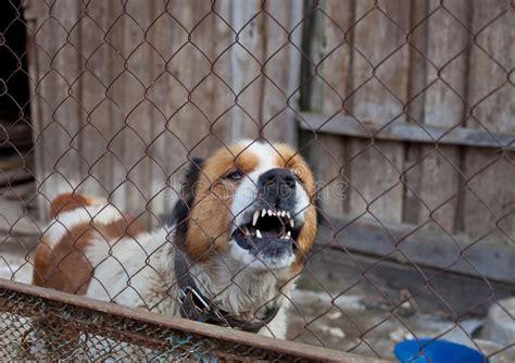 cani in gabbia aggressivo in gabbia fotografia stock immagine di