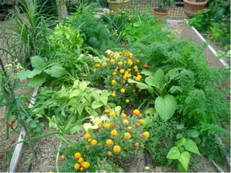 Garden Companion Planting by Companion Gardening Plants Going In