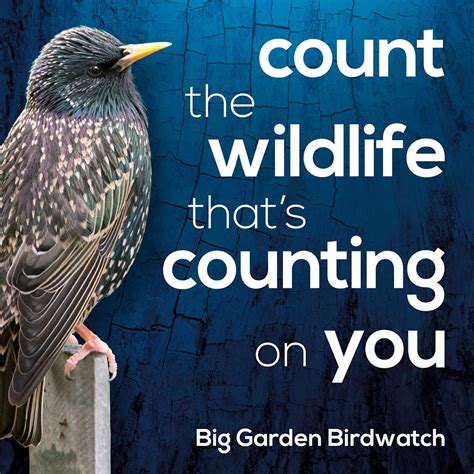 Rspb Great Garden Birdwatch Results Are In by Get Ready For The Rspb Big Garden Birdwatch At Radipole