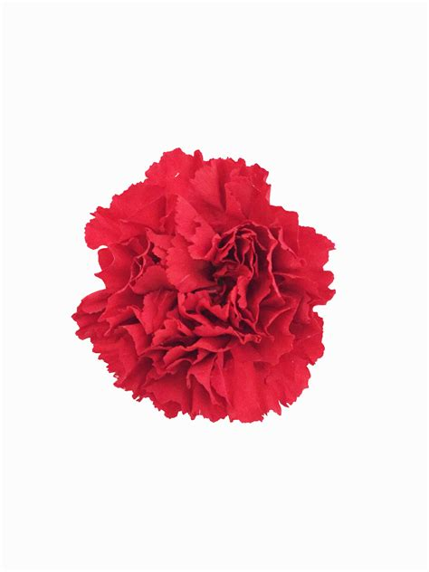 red carnations  bulk metropolitan wholesale nj ny