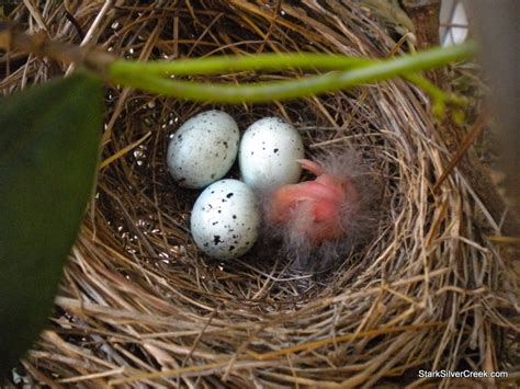 four eggs no more stark insider