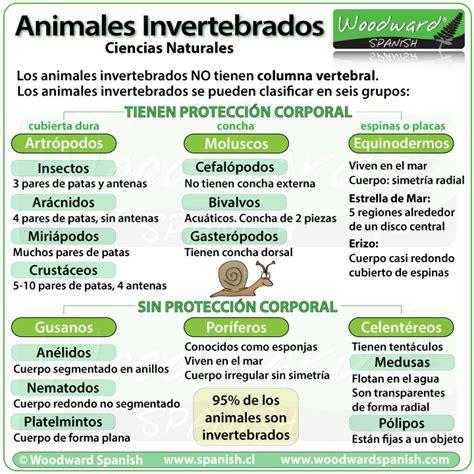 imagenes sensoriales wikipedia concepto los animales invertebrados clasificaci 243 n y ejemplos