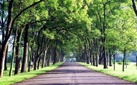 wallpaper jalan pepohonan hijau jalan taiwan gambar background hd