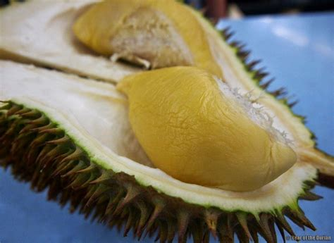 bibitbuahonline durian sultan d24 d24 sultan durian value set 5 packs