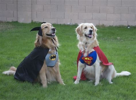 golden retriever costume costumes i golden retrievers