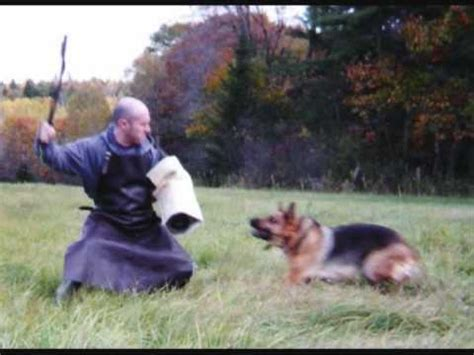 how to a german shepherd to attack german shepherd attack