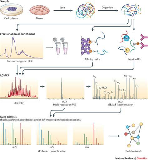 proteomics workflow proteomics