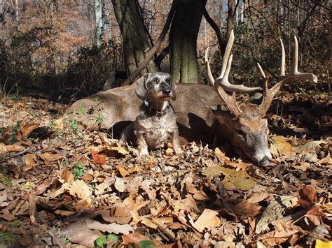 deer with dogs pennsylvania bill to allow with blood trailing dogs stalls fish