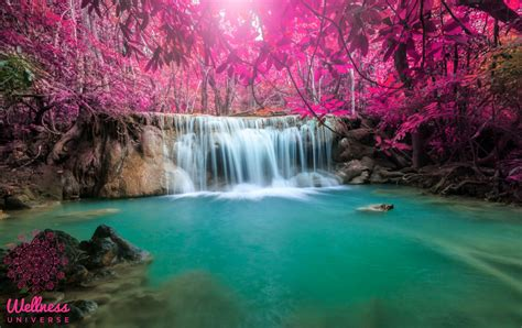 water rituals  clearing  healing  wellness universe blog