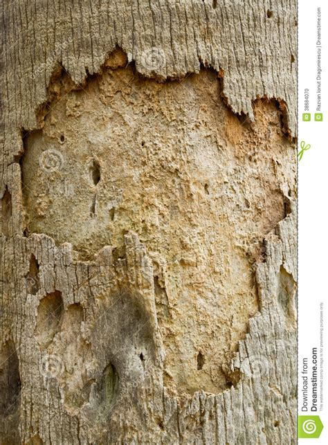 skin the color of bark pin mayangs textures wood bark on