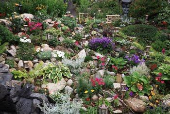 plants  rockery gardens home guides sf gate