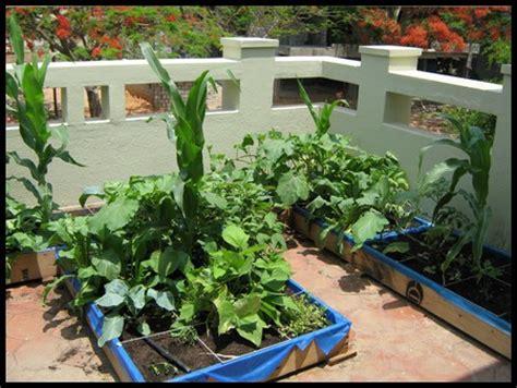 Terrace Gardening Growing Vegetables In Containers Vegetable Gardening In Terrace